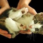 かわいい猫拾ったwwwwwwww