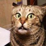 【ナイジェリア】魔術で猫に変身した12歳少年が捕獲される