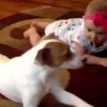 【動画】犬が赤ちゃんにハイハイの仕方を教える
