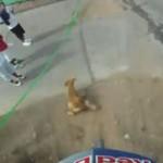 チリで行われた街中自転車レース動画 怖すぎワロタ