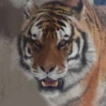小学生の時って、校庭に虎が入ってきただけで盛り上がったよな