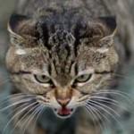 """研究結果""""ネコは撫でるとストレス""""と報道 → 猫キチの絶望と嗚咽 → 研究者慌てて補足"""