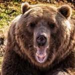 """【米国】""""クマと自撮り""""ブーム、米国森林局が危険性を警告・・・「アホすぎる」「人はなぜこうも愚かなのか」の声"""