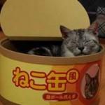 猫缶なのに間違えて 俺「箸つけますか?」  女性「いらないですにゃー」