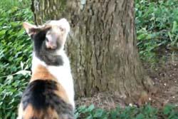 木から下りられなくなった子ネコを助けようとする母ネコの動画が微笑ましい