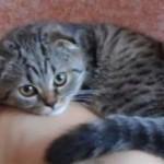 【動画あり】パパは私の物よ!頬から離れずいつまでもすりすりする猫ちゃんが可愛い!!!!!