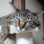 ワイのネッコの寝顔wwwww