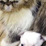 【画像】ネコがイヌを出産…中国
