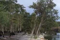 (^q^) アメリカでとんでもない池沼が現れる