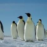 ペンギン多すぎワロタ