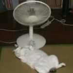 【画像あり】暑すぎてショッピングセンターで涼む人が続出