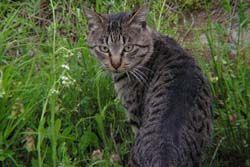 猫はカニ歩きで近づくと逃げない? 猫の興味深い習性
