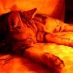 【画像】コタツしまったらネコが寂しそうな件
