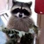 異なる動物同士が仲良くしている写真がカワイすぎ!