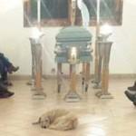 野良猫と野良犬に餌を与えていた女性が亡くなる→女性の葬儀に20匹の野良猫、野良犬が訪れる メキシコ