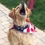 おやつをキャッチできない犬がかわいいwww