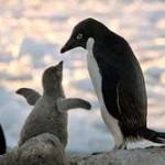 【画像あり】 ペンギン怖すぎワロタ