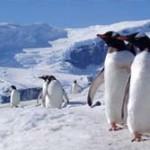 郵便局員募集 月給:20万円 水道:なし 電話:なし ネット:なし 勤務地:南極 ペンギンつき