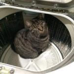 洗濯機の「カビ臭い」においの原因はカビじゃなかったことが判明