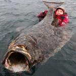 108万円相当の超巨大オヒョウを1時間かけて釣り上げた青年、またいつか釣るためにリリースする