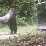 【動画】サバンナに大きい鏡置いた結果wwwww