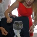ルーマニアの会社が通信部門の主管として猫のBossyを起用