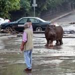 ジョージアで洪水 トラ、ライオン、クマ、オオカミ、カバが市内に逃げ出す