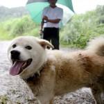 【鹿児島】犬のジュウタロウ、無事に飼い主と再会…口永良部噴火から2週間