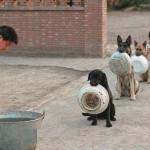 【画像】中国の警察犬のお食事風景かわいすぎワロタwwwww