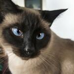 【知ってた】猫の写真やムービーを見ていると、不安やストレスが減少することが判明