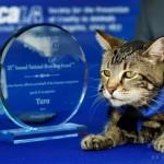 米動物愛護団体、猫に「ヒーロー犬賞」を授与…子どもを犬から救った雌猫「タラ」