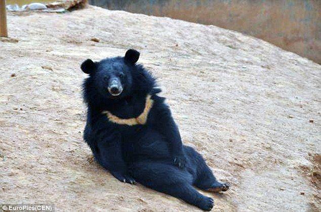 【画像】子犬だと思って2年間育てていたら、実はクマだった!…中国