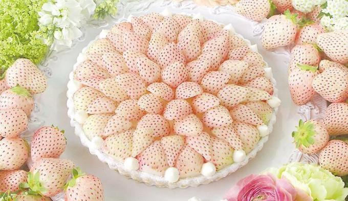 【閲覧注意】くっっっそキモいタルトケーキ見つけたwwwww