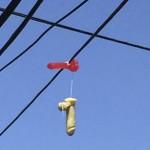 【画像】送電線に無数の「大人のおもちゃ」が吊るされる