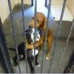【画像】殺処分目前、抱き合っておびえる犬 投稿写真に大きな反響