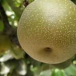 二日酔いには梨が効くことが判明!飲み会の前には梨を食べるのが一番!