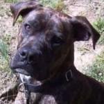 子犬の時に脱走した犬、9年の月日を経て飼い主の元に戻る