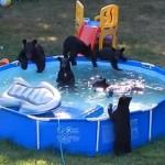 【画像】クマの親子連れが庭の簡易プールで楽しそうに遊ぶ姿が撮影される