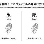 地面のセミ、なぜ「死んだふり」をするのか? 専門家が解説