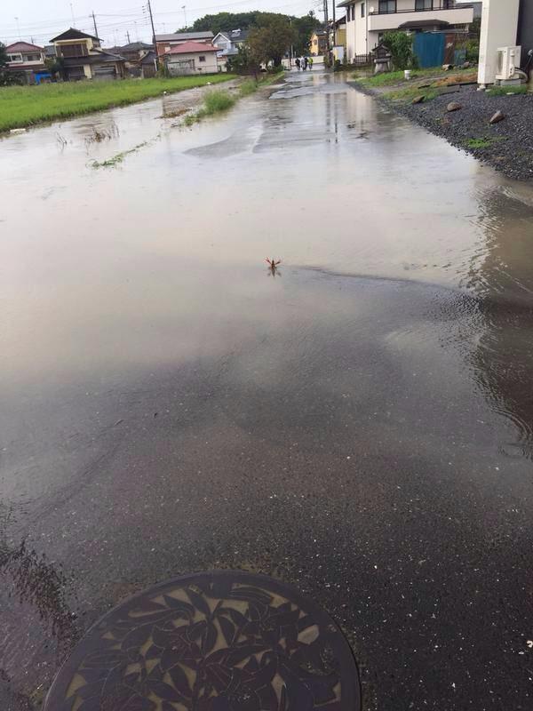 【画像】洪水に立ち向かうザリガニニキwwwww