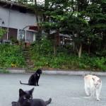 【大分】ネコのおもてなし、温泉宿救う 廃業危機から復活