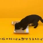 【動画】クロネコが箱を組み立てる様子が可愛すぎるwwwww