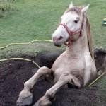 【カナダ】馬がうまる