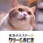 【画像】コンビニに住む猫が世界的ブレイク! CNNでも報じられた世界一有名なニャンコ「クリーム兄貴」