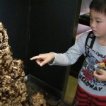 【画像】ゴキブリ2千匹ワサワサ、ケースなし展示…園長「ケースで遮断すると恐怖が半減する。飛んでくるかも、臭いなどの感覚大事に」