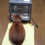 ネコ「お、暖かいやつあるやんけ!前座ったろ!」