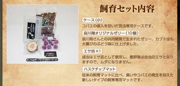 哀川翔のカブトムシ育成キットの価格wwwww
