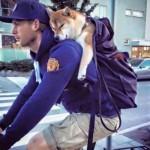 【画像】主人の背中で寝ている柴犬が可愛いすぎて話題に