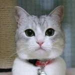 【訃報】人気ブログ猫の「うに」死す 3千件超す、お悔やみ投稿