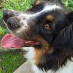 【画像】鼻が2つあるイヌ、殺処分直前に奇形動物コレクターに引き取られる